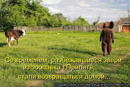 Котоматрица: Со временем, разбежавшиеся звери  из зоопарка г.Припять, стали возвращаться домой...