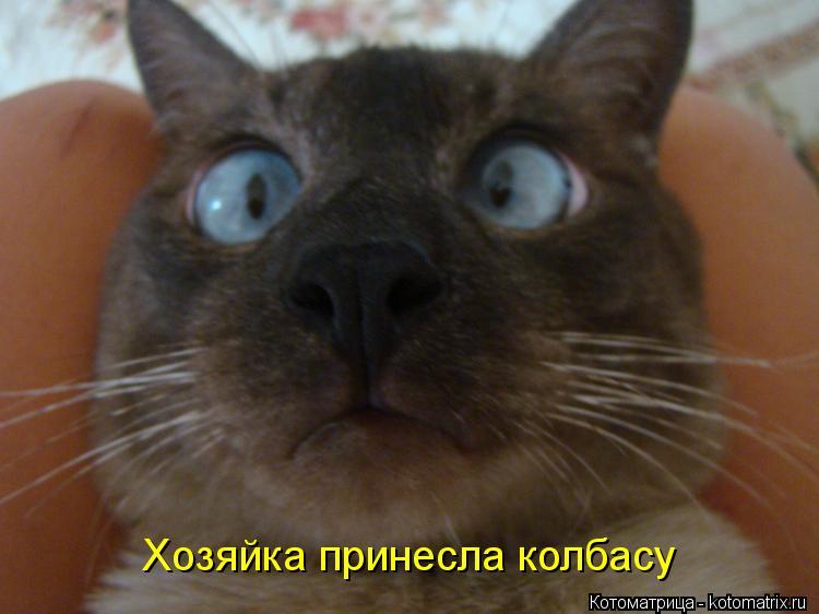 Котоматрица: Хозяйка принесла колбасу