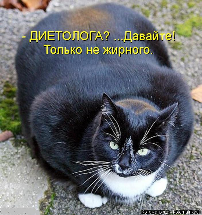 Котоматрица: - ДИЕТОЛОГА? ...Давайте! Только не жирного.