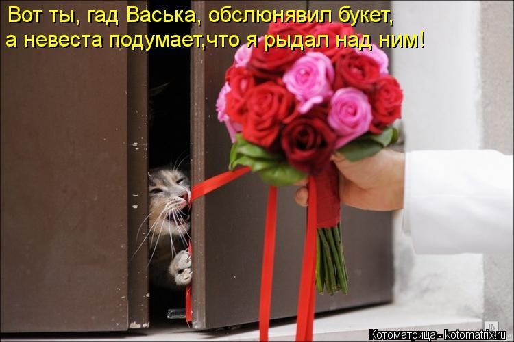 Котоматрица: Вот ты, гад Васька, обслюнявил букет, а невеста подумает,что я рыдал над ним!