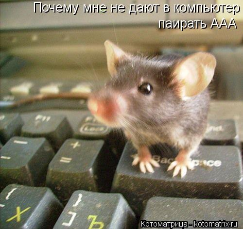 Котоматрица: Почему мне не дают в компьютер паирать ААА   паирать ААА