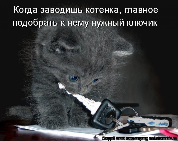 Котоматрица: Когда заводишь котенка, главное подобрать к нему нужный ключик