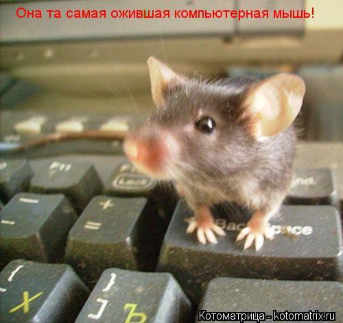 Котоматрица: Она та самая ожившая компьютерная мышь!