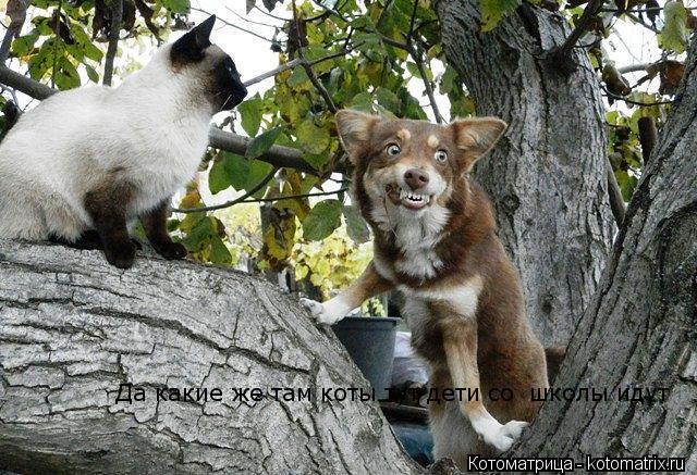 Котоматрица: Да какие же там коты тут дети со  школы идут