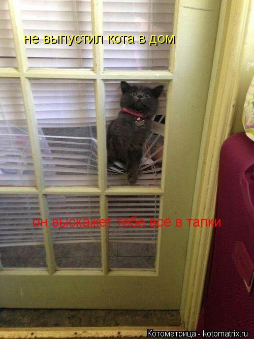 Котоматрица: не выпустил кота в дом  он выскажет тебе всё в тапки