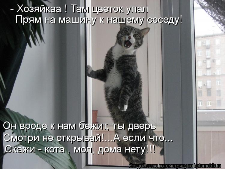 Котоматрица: - Хозяйкаа ! Там цветок упал  Прям на машину к нашему соседу! Он вроде к нам бежит, ты дверь  Смотри не открывай!...А если что... Скажи - кота , мол,