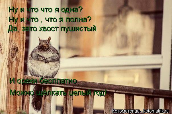 Котоматрица: Ну и что что я одна? Ну и что , что я полна? Да, зато хвост пушистый И орехи бесплатно Можно щёлкать целый год!