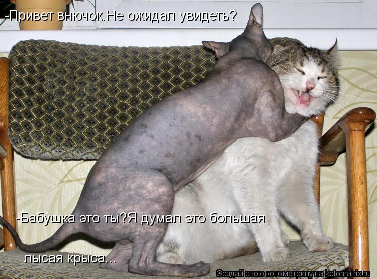 Котоматрица: -Привет внючок.Не ожидал увидеть? -Бабушка это ты?Я думал это большая лысая крыса...