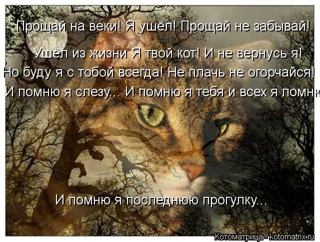 Котоматрица: Прощай на веки! Я ушёл! Прощай не забывай! Ушёл из жизни Я твой кот! И не вернусь я! Но буду я с тобой всегда! Не плачь не огорчайся! И помню я по