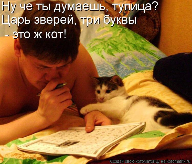 Котоматрица: Ну че ты думаешь, тупица? Царь зверей, три буквы - это ж кот!
