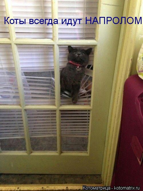 Котоматрица: Коты всегда идут НАПРОЛОМ