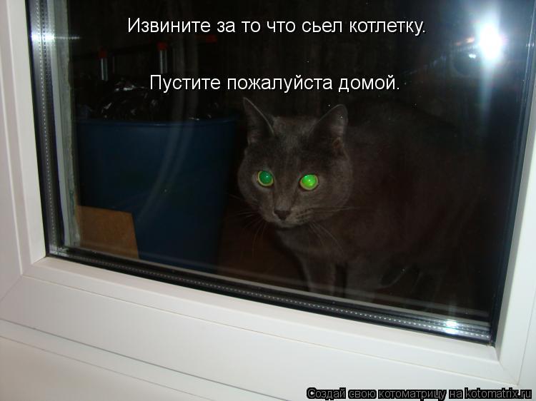 Котоматрица: Извините за то что сьел котлетку.  Пустите пожалуйста домой.