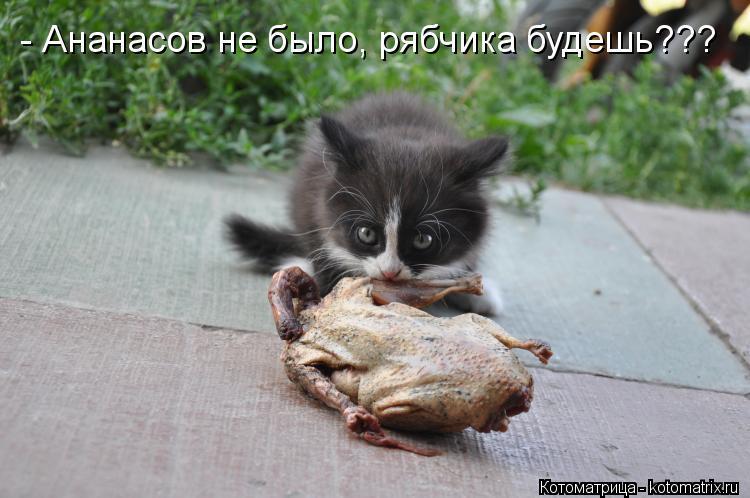 Котоматрица: - Ананасов не было, рябчика будешь???