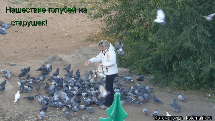 Котоматрица: Нашествие голубей на  старушек!