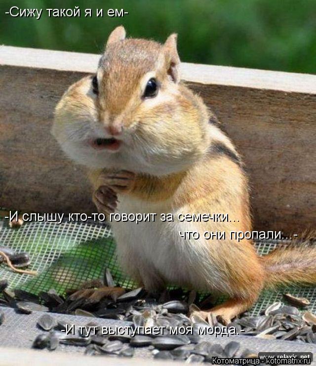 Котоматрица: -Сижу такой я и ем- -И слышу кто-то говорит за семечки... что они пропали...- -И тут выступает моя морда.-