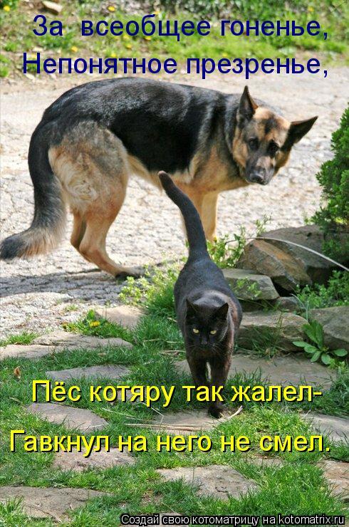 Котоматрица: За  всеобщее гоненье, Непонятное презренье, Пёс котяру так жалел- Гавкнул на него не смел.