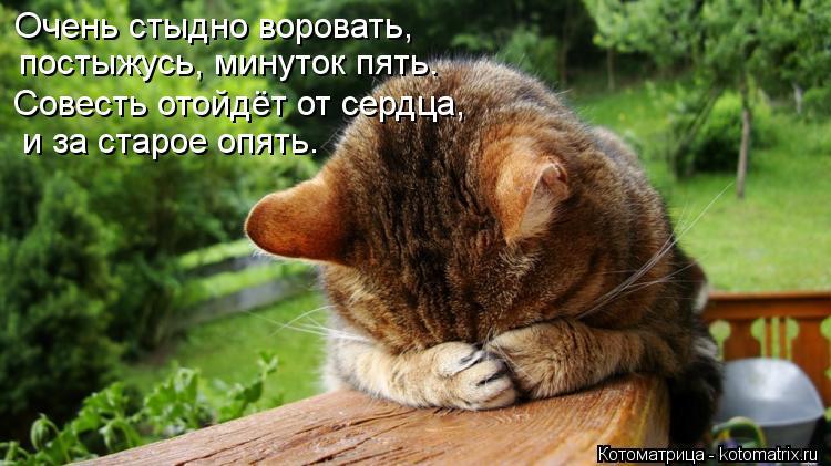 Котоматрица: Очень стыдно воровать, постыжусь, минуток пять. Совесть отойдёт от сердца, и за старое опять.
