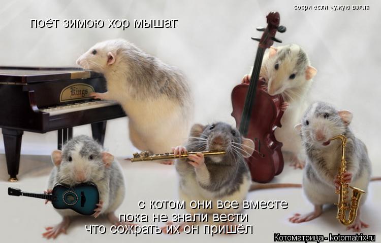Котоматрица: поёт зимою хор мышат с котом они все вместе пока не знали вести что сожрать их он пришёл сорри если чужую взяла