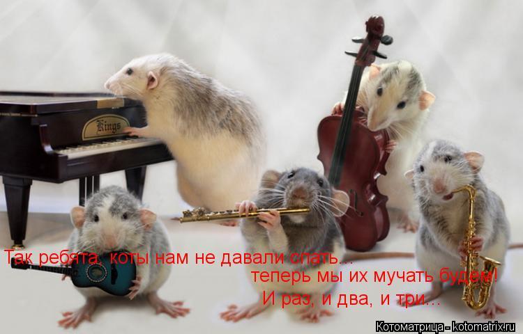 Котоматрица: Так ребята, коты нам не давали спать... теперь мы их мучать будем! теперь мы их мучать будем! И раз, и два, и три... И раз, и два, и три...