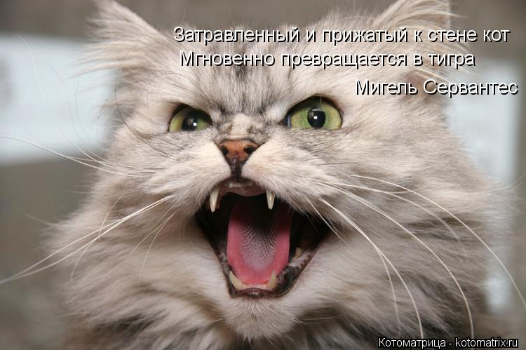 Котоматрица: Затравленный и прижатый к стене кот Мгновенно превращается в тигра Мигель Сервантес