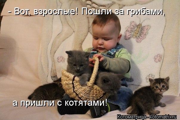 Котоматрица: - Вот, взрослые! Пошли за грибами, а пришли с котятами! - Вот, взрослые! Пошли за грибами, а пришли с котятами!