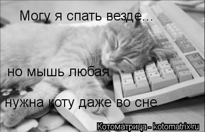 Котоматрица: Могу я спать везде... но мышь любая нужна коту даже во сне
