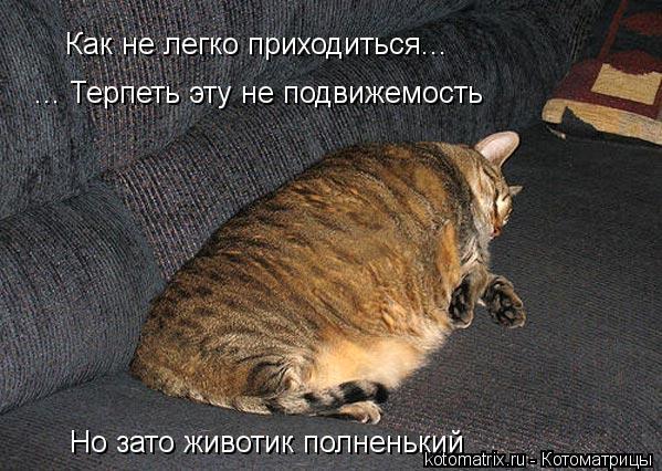 Котоматрица: Как не легко приходиться...  ... Терпеть эту не подвижемость  Но зато животик полненький