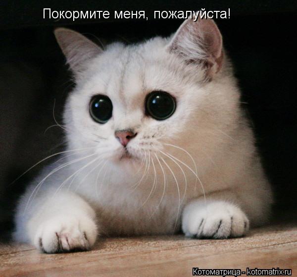 Котоматрица: Покормите меня, пожалуйста!