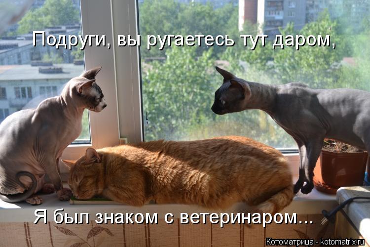 Котоматрица: Подруги, вы ругаетесь тут даром, Я был знаком с ветеринаром...