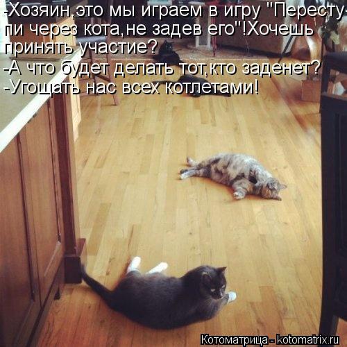 """Котоматрица: -Хозяин,это мы играем в игру """"Пересту- пи через кота,не задев его""""!Хочешь  принять участие? -А что будет делать тот,кто заденет? -Угощать нас вс"""