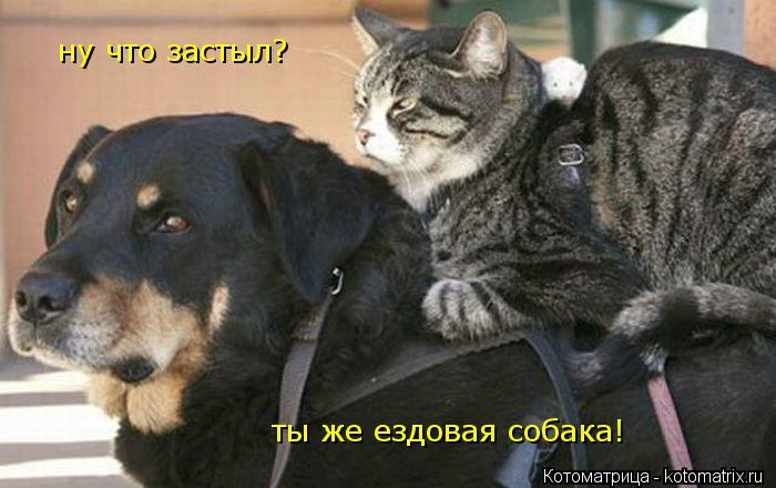 Котоматрица: ну что застыл? ты же ездовая собака!