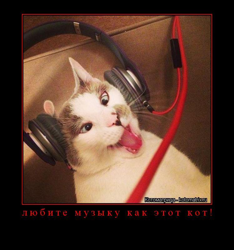 Котоматрица: любите музыку как этот кот!