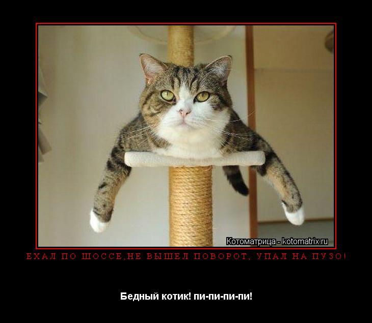 Котоматрица: ЕХАЛ ПО ШОССЕ,НЕ ВЫШЕЛ ПОВОРОТ, УПАЛ НА ПУЗО! Бедный котик! пи-пи-пи-пи!