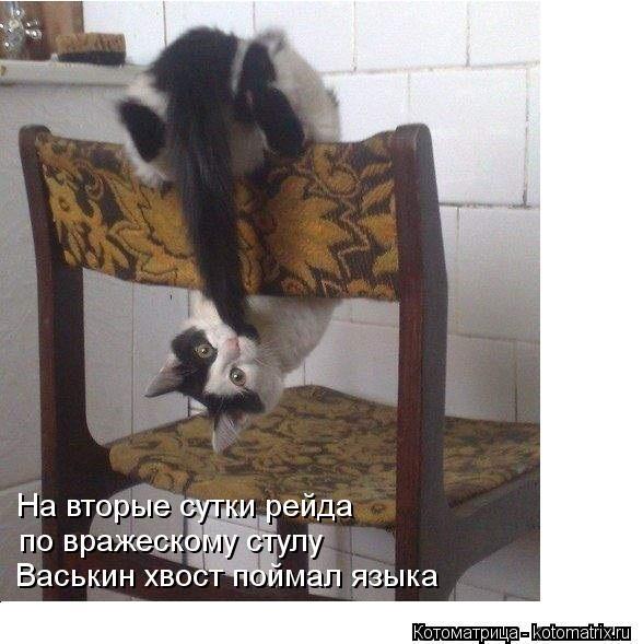 Котоматрица: Васькин хвост поймал языка по вражескому стулу На вторые сутки рейда