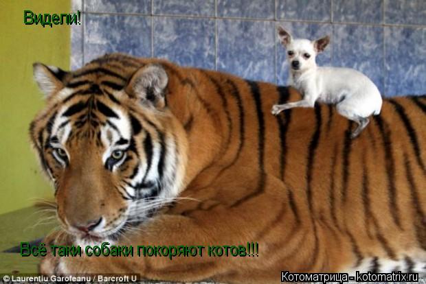 Котоматрица: Видели! Всё таки собаки покоряют котов!!!