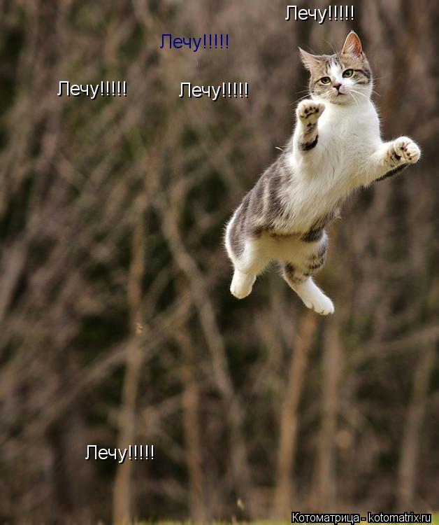 Котоматрица: Лечу!!!!! Лечу!!!!! Лечу!!!!! Лечу!!!!! Лечу!!!!!