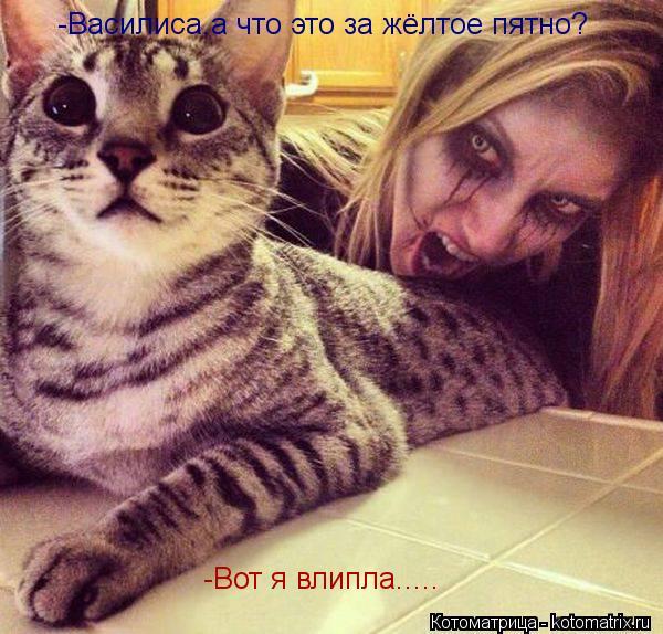 Котоматрица: -Василиса,а что это за жёлтое пятно? -Вот я влипла.....