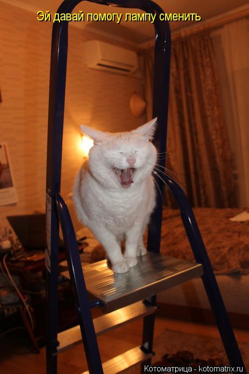 Котоматрица: Эй давай помогу лампу сменить