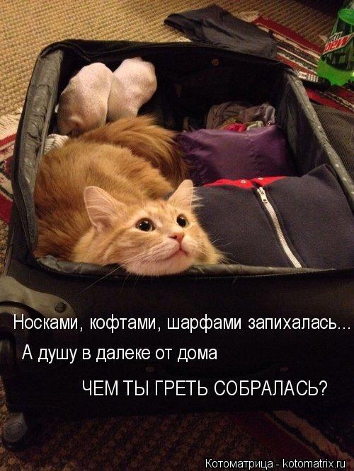 Котоматрица: Носками, кофтами, шарфами запихалась... А душу в далеке от дома ЧЕМ ТЫ ГРЕТЬ СОБРАЛАСЬ?