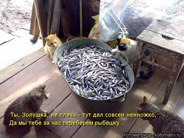 Котоматрица: Ты, Золушка, не плачь - тут дел совсем немножко, Да мы тебе за час переберем рыбёшку...