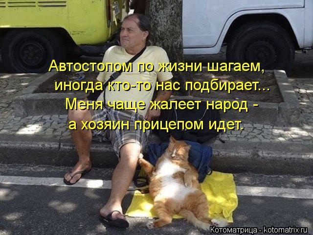 Котоматрица: Автостопом по жизни шагаем, иногда кто-то нас подбирает... Меня чаще жалеет народ -  а хозяин прицепом идет.