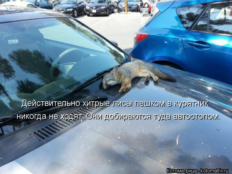 Котоматрица: Действительно хитрые лисы пешком в курятник никогда не ходят. Они добираются туда автостопом.