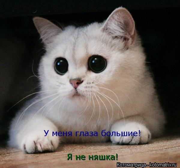 Котоматрица: Я не няшка! У меня глаза большие!