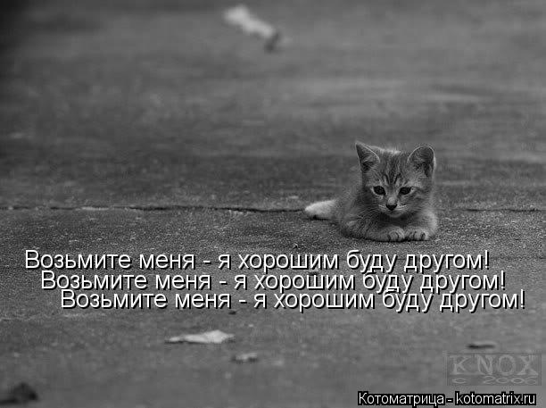 Котоматрица: Возьмите меня - я хорошим буду другом! Возьмите меня - я хорошим буду другом! Возьмите меня - я хорошим буду другом!