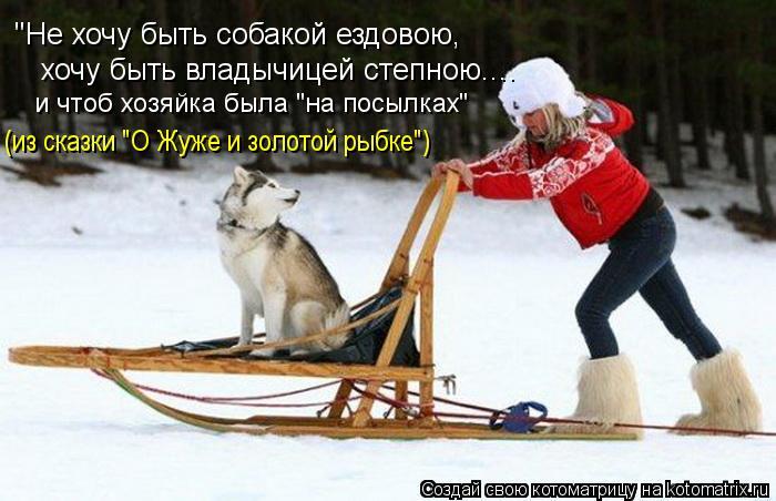 """Котоматрица: """"Не хочу быть собакой ездовою,  хочу быть владычицей степною.... (из сказки """"О Жуже и золотой рыбке"""") и чтоб хозяйка была """"на посылках"""""""