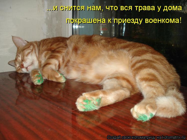 Котоматрица: ...и снится нам, что вся трава у дома покрашена к приезду военкома!
