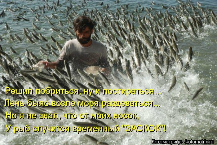 """Котоматрица: Решил побриться, ну и постираться... Лень было возле моря раздеваться... Но я не знал, что от моих носок,  У рыб случится временный """"ЗАСКОК""""!"""