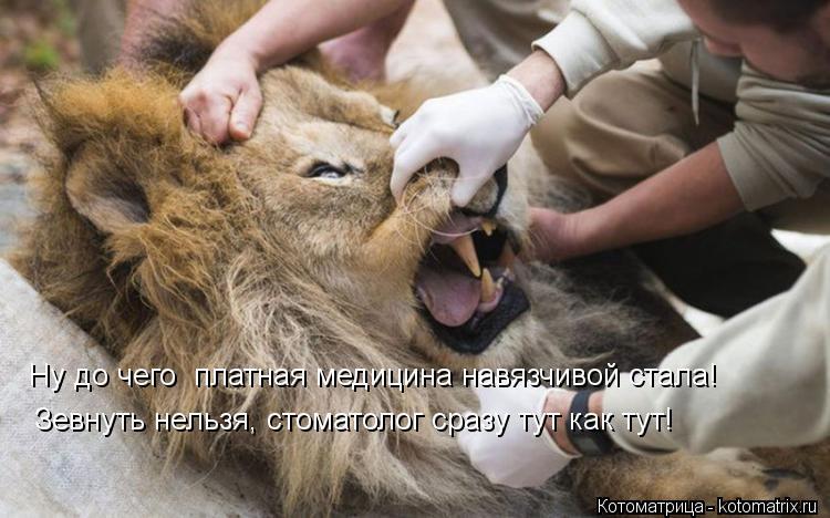 Котоматрица: Ну до чего  платная медицина навязчивой стала! Зевнуть нельзя, стоматолог сразу тут как тут!