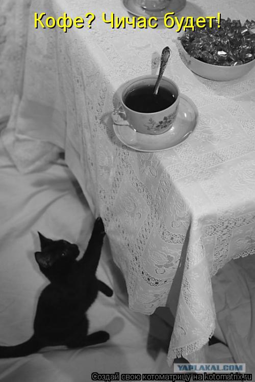 Котоматрица: Кофе? Чичас будет!