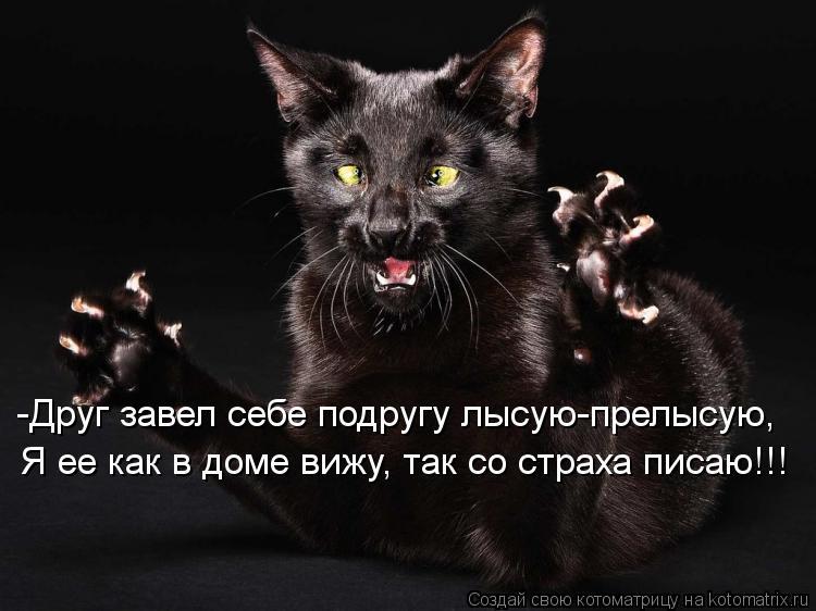 Котоматрица: -Друг завел себе подругу лысую-прелысую, Я ее как в доме вижу, так со страха писаю!!!